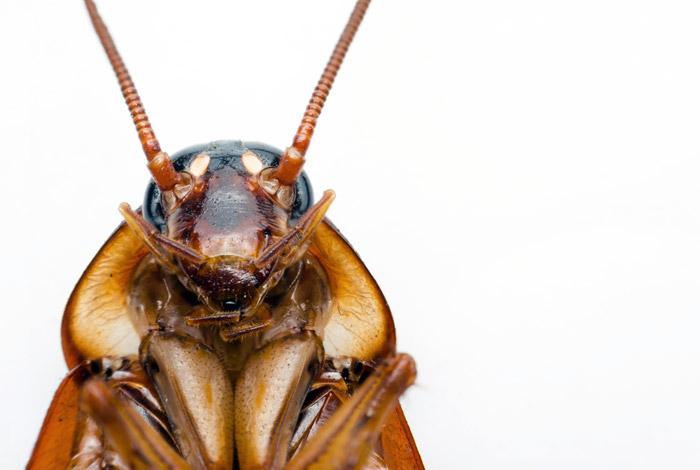 Как избавиться от тараканов: бесполезные и эффективные методы